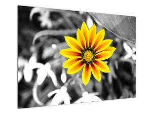 Obraz žluté květiny (V020361V10070)