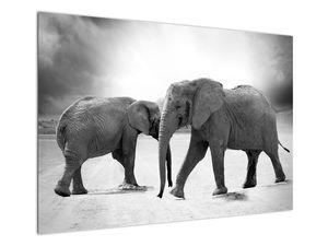Obraz - černobílí sloni (V020398V10070)