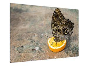 Obraz motýla (V020454V10070)