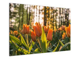 Obraz - oranžové tulipány (V020552V10070)