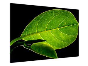 Obraz - zelený list (V020628V10070)