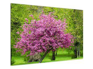 Obraz rozkvetlého stromu na louce (V020654V10070)