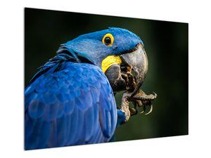 Obraz papouška (V020714V10070)