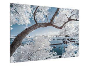 Obraz zasněženého stromu u vody (V020718V10070)