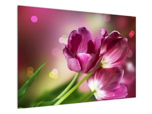 Obraz růžových tulipánů (V020887V10070)