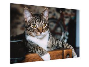 Obraz kočky (V020889V10070)