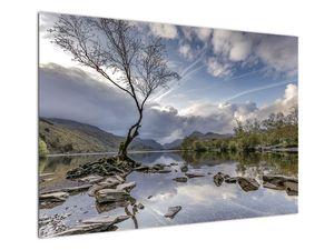 Obraz řeky se stromem (V020917V10070)