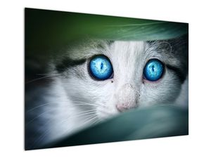 Obraz kočky (V020944V10070)