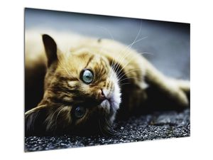 Obraz kočky (V020963V10070)
