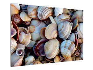 Kagyló képe (V021131V10070)
