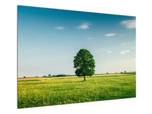 Obraz stromu na louce (V021171V10070)