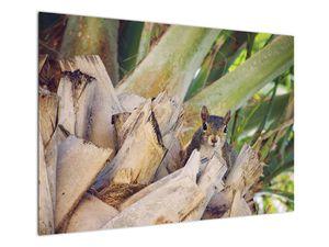 Obraz veverky na stromu (V021177V10070)