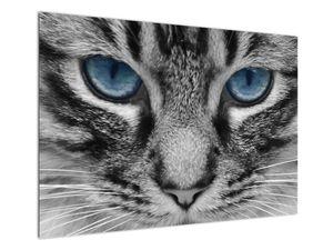 Obraz kočky (V021221V10070)