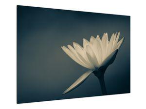 Obraz květiny (V021223V10070)