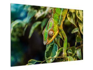 Obraz chameleona (V021236V10070)