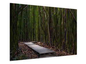Obraz - Medzi bambusy (V021324V10070)