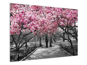 Obraz stromů Magnolíie (V021344V10070)