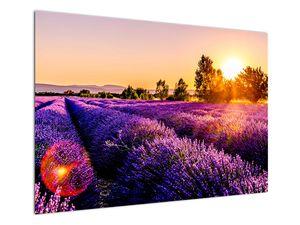 Obraz levandulového pole, Provence (V021590V10070)