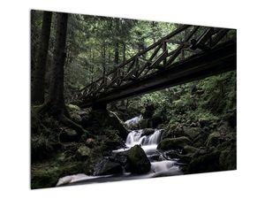 Obraz z černého lesa (V021686V10070)