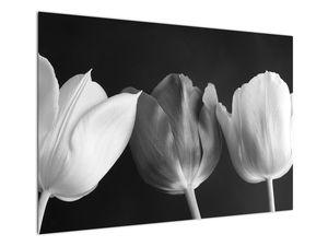 Kép - fekete-fehér tulipán virág (V021916V10070)