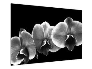 Obraz květu orchideje (V022015V10070)