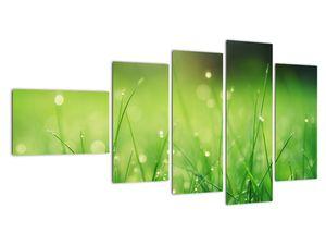 Obraz - rosa na trávě (V020169V11060)