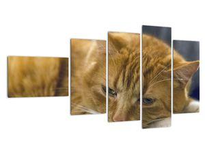Obraz mačky (V020192V11060)