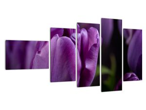 Obraz květů tulipánů (V020215V11060)