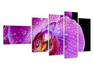 Detailní obraz květu orchideje (V020314V11060)
