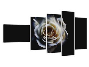 Obraz bílé růže (V020370V11060)