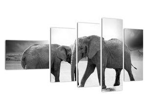 Obraz - černobílí sloni (V020398V11060)