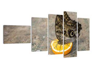 Obraz motýla (V020454V11060)