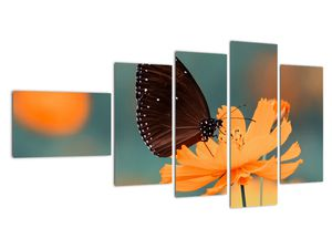Obraz - motýl na oranžové květině (V020577V11060)
