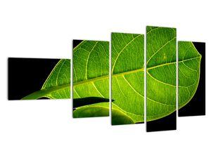 Obraz - zelený list (V020628V11060)