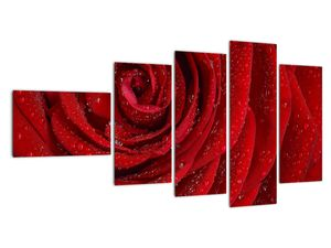 Obraz - detail růže (V020684V11060)