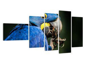Obraz papouška (V020714V11060)