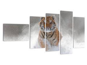 Obraz bežiaceho tigra v snehu (V020719V11060)