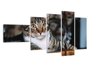 Obraz kočky (V020889V11060)