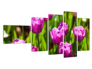 Obraz tulipánov na lúke (V020893V11060)