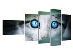 Obraz kočky (V020944V11060)