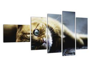 Obraz kočky (V020963V11060)