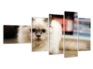Obraz bílé kočky (V021124V11060)