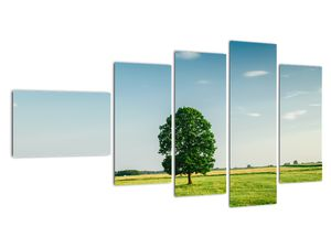 Obraz stromu na louce (V021171V11060)