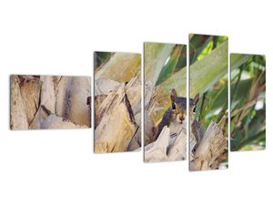 Obraz veverky na stromu (V021177V11060)
