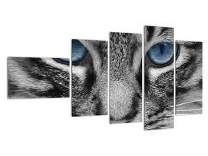 Obraz kočky (V021221V11060)