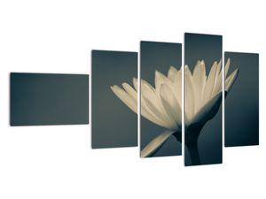 Obraz květiny (V021223V11060)
