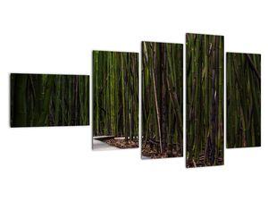 Obraz - Medzi bambusy (V021324V11060)