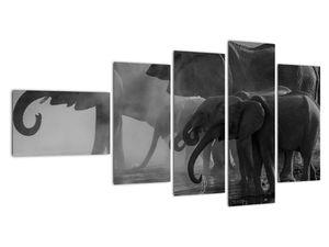 Obraz slonů - černobílý (V021575V11060)