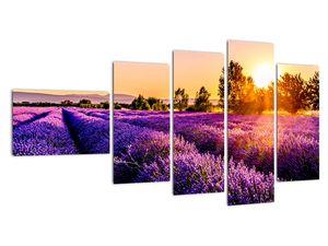 Obraz levandulového pole, Provence (V021590V11060)