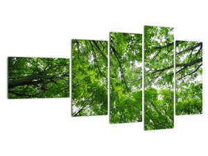 Obraz - Pohled do korun stromů (V021918V11060)